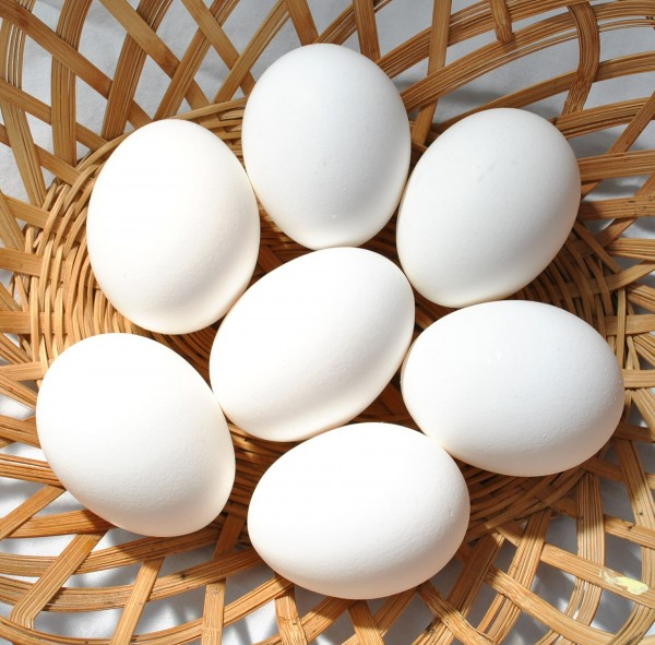 Des oeufs de poule blancs