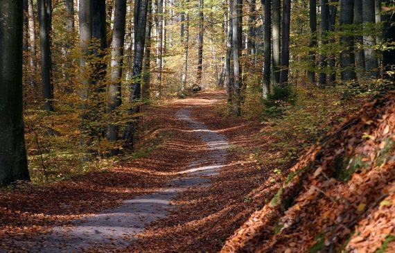Une journée en forêt pendant l'automne - Photo Pixabay